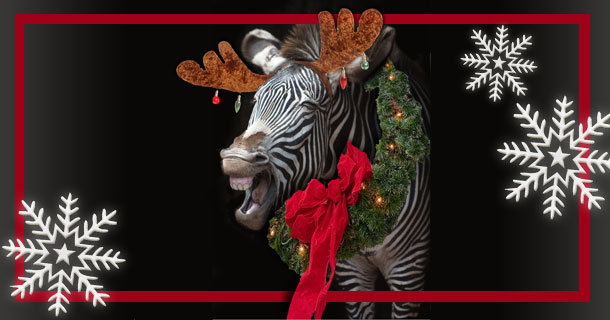 Zebra decorated for Christmas