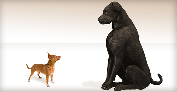Big dog facing little dog